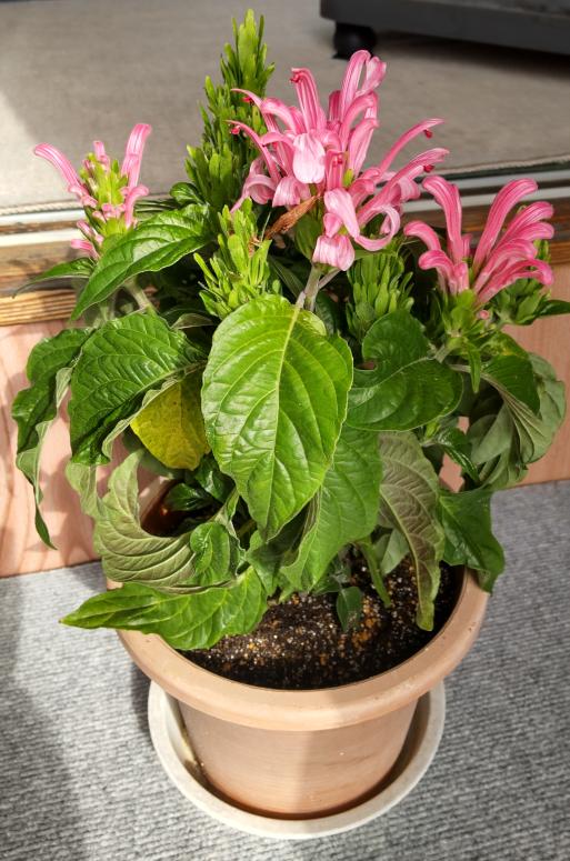 画像の花の名前がおわかりになる方、教えてください。よろしくお願いします。
