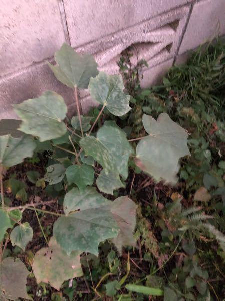 この植物は何という名前でしょうか? いつもすみません。 素敵な花が咲くなら処分できないなと思い。 宜しくお願いします。
