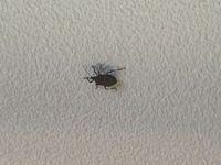 これはなんという虫ですか?