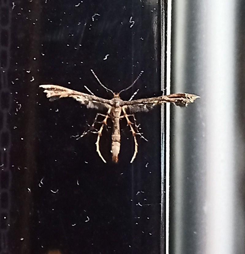 この虫は誰ですか?