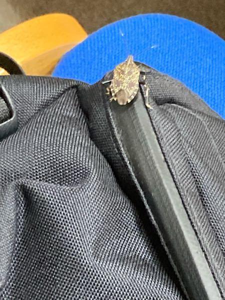 このカバンに付いてる虫キモイのですが何か分かりますか?