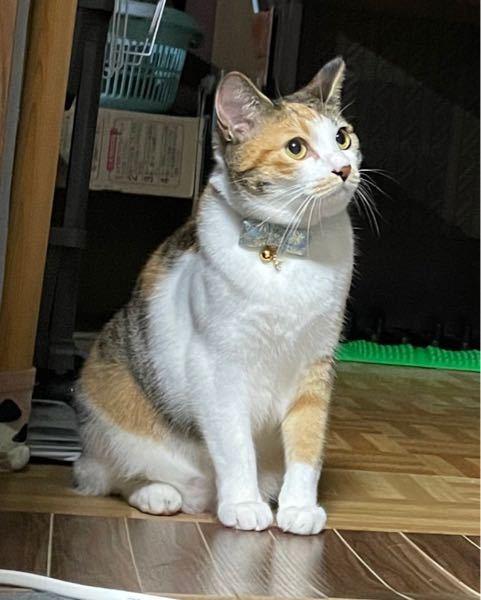 猫の咳について うちの猫ちゃんが、時々咳?をします。 (当初、吐きそうなのかと勘違いしてました) (猫の咳 で検索した動画を見ると、間違いなく咳だとは思ってます) 下記にて状況をまとめるので、経...