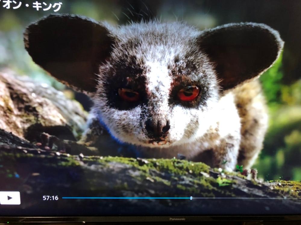 この動物はなんですか?