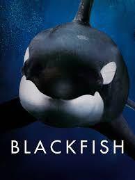 アマゾンプライムにて black fish は見ることができますか? 別途料金がかかる感じでしょうか?