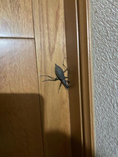 夜遅くすみません。これは何という虫ですか?