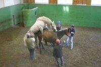 馬の種付けを見る時 何を思いますか?      ・      ・      写真はアドマイヤコジーンです。 いつか人間のアドマイヤコジーンさんもこうなるのか!?