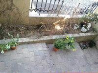 玄関脇に花壇があります。北側で西日は当たりませんが、日中も日陰です。奥行き60センチ、幅は120センチ位です。 現在はユキヤナギを植えていま したが、冬場に落葉して寂しいので、他の植物も植えようと思います。 シェードガーデンについて調べて下記の花木を買いました、 ●クリスマスローズ ●スノードロップ ●ジンチョウゲ沈丁花 ●ユリオプスゴールデンクラッカー ●ジャスミン ●シマヒイラギ ●ガー...