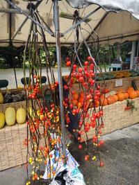 この木なんの木、気になる木 群馬県の沼田辺りの野菜の直売所に飾ってあった赤い実をつけた枝です 食べられないって店番のお婆ちゃんが言ってました 何の枝ですか?