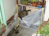 ● 至急 ベランダで野良猫が子供を産んでいます 対処方法は・・・・ 久しぶりに暖かいのでベランダの掃除をしていたら、簡易温室の土を入れている部分で猫が居ました。  最初は突っついたり水を掛けたりしていま...