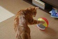 ◆ネコちゃんは紙風船好きですか?(^_^;) 最後はボロボロかな~
