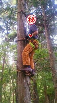 写真は日本の林業技術者が山の特殊伐採で使っている『ぶり縄』という即席ハシゴなんですが、皆様お住まいの海外でも林業でこういうぶり縄みた いな即席ハシゴつかった特殊伐採はありますか? また、そのぶり縄のことを現地語でなんと言うか分かれば教えてください。  現在の西洋人はspikeを使って木登りをするみたいなのでぶり縄を使う発想は無いみたいですね。 だけど昔の西洋人はぶり縄みたいなのを使って林業や...