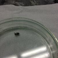 これは何クモですか? 鬼みたいに触覚?が二本たってます。 足は六本みたいです