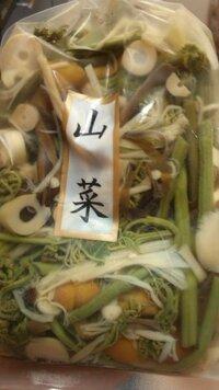 至急!  この山菜って  そのまま生で食べれますか?  茹でるのですか(´∞`)?