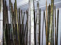 中国の揚子江と黄河を結ぶ運河は、掘削技術に長けた日本人を連れてきて掘らせたのですか? 当時からうまい竹の使い方をしていたものですね!
