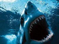ホオジロザメvsシャチ海の王は? 体長は同じくらいの両者ですが 体重が二倍近く違うからシャチが勝つなど色んなところでシャチ優勢と読むのですが どうしてもシャチがサメを圧倒できるように思えません。 確か...