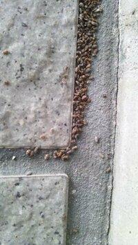 虫の駆除について 写真の虫が建物の外壁に沸いています。 大きさは1~2mm位で薄灰色。 虫スプレーをかけたら茶色になりましたが次々新しい虫が湧いてきます。 虫の名前と駆除の方法をご存知の方が居ました...