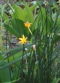 黄色い花は何ですか? 細長い黄色い花の名前おしえてください。