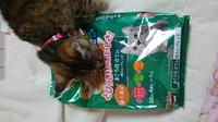 うちの猫が避妊手術後の食欲がすごいんです。 先日、避妊手術しました。 ♀、9ヶ月です。 前は食が細くて、避妊手術後びっくりするくらい良く食べます! 専用の餌に変えないと肥満になりますよね? お医者さんは...