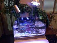 海水魚の飼育についてです。 この度、カクレクマノミやサンゴ等を飼育したく 水槽を立ち上げました。  水槽はダイニングにあう45×24×16の極少タイプの水槽です。 濾過装置はトットパーフェクトフィルターSS、海道河童(小) 照明はグランクリエイト24W(白8.青4)、アクアシステム(青3)  外部フィルターも考えましたが なにせリビングのカウンターでしたので 外掛けになりま...