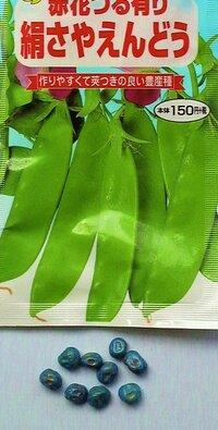 市販のフィルムコート(チラウム剤処理済)された種子は 一晩あるいは一昼夜 水につけておけば 発芽率があがるでしょうか? (*自前のオクラの種などはそうしていますが・・)