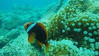 デジカメの設定方法で良いアドバイスがあれば教えて下さい!! ペンタックス wg2を使用しています。 普段使っている時には不満は無いのですが、 今年の夏休みに石垣島でダイビングをした時に撮った写真が肉眼で見た色と全然違う全体的に 緑色っぽい感じで、オレンジ色の魚も黒っぽく 写っていました。 他のダイバーさん達はオリンパスのTG820 TG615 等を使用しており、頂いた画像もとても鮮明に写って...