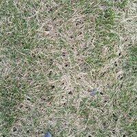 芝生に無数の穴があいています! 土が盛り上がってないので蟻ではなさそうです。 穴の大きさは、傘の先で挿したような大きさです。 玄関先でマメハンミョウのような虫をみたので、そうかなと も思いますが… はっきりしたいので、特定する方法がしりたいです。 よろしくお願いします。