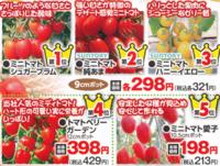 HCの今年の「ミニトマト苗ベスト5」は妥当ですか? よく利用するHCからの広告ハガキに「ミニトマト苗ベスト5」が掲載されてました。  順位は以下の通りで、糖度・収穫・作りやす等は妥当ですか? 第5位...