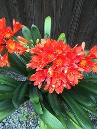 この鮮やかなオレンジ色の花の名前は何ですか?