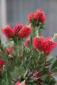 この植物の名は何でございましょうか?   無知なもので今日初めて見ました。   ヘンな花でした。   つか、これ、花なんでしょーか。    教えて!! エライ人!!