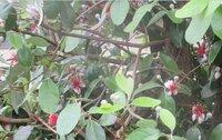 このかわいい花咲く木は何ですか?