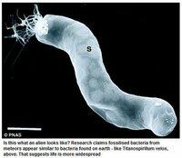 ☆生命(細菌)の起源について  自然発生か? 創造か?という質問です  = (A) 地球生命(細菌)の起源は ① 地球で自然発生ですか? それとも ② 地球外からやって来たのですか?  ー (B) DNAを...