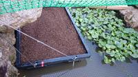 カメの産卵について教えてください 一応写真のような産卵容器は設置しました。土は堆肥+鹿沼土+園芸用土です。 カブトムシの幼虫が好みそうな土になって しまったのですが、大丈夫でしょうか?  カメが土まみれに...