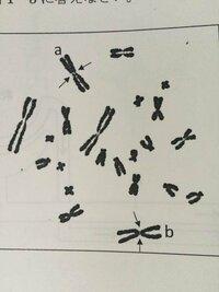 こんにちは。 生物の問題なんですが 回答がありませんので答えを教えていただければと思います。 (問題は解き終わりました)  問題1 ①「真核生物の体細胞は、普通、1個の核を持っている。」体細胞分裂の間期の核...