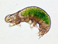 クマムシのように、不死身の生命力を持った細菌は、存在しますか?