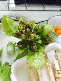 畑にはえてました。 ふきのとうに少し似てます。 この野菜なんていう野菜ですか?