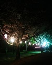 心霊写真の鑑定お願いします。 先ほど夜桜の撮影に行ってきたのですがなんだか右下に女性が覗いてるような形で写りこんでるような気がして怖いです。 勘違いかもしれませんがどうか鑑定して頂けると嬉しいです...m(_ _)m