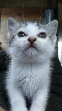 この地球上で一番可愛い動物は゛子猫゛だと思いませんか?
