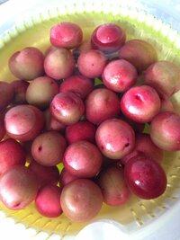 梅の実と思いとってきて梅酒にしようと思ってます。しかし、自分で調べた中にこのように赤い梅の実がなく、梅酒にできるのか不安になってきました。これは梅酒にできるものなのでしょうか?ちな みに薄ピンクの桜のような花が咲いた後、赤茶色の葉がついて、このような実がついていました。