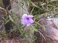 コンクリートの構造物の隙間から生えていました。この花の位置は低いですが、背丈は70cm位はあったような・・・。6月16日に撮ったものです。何という植物でしょうか。