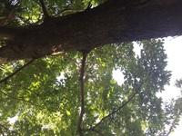 植物に詳しい方、お願いします。この木は楡の木だと思いますが、ハルニレかアキニレどちらでしょうか。分かりづらい画像ではありますが、おわかりの方、教えて下さい。よろしくお願いします。