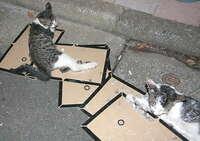 猫がネズミ捕りの粘着シートに誤ってくっつくケースはあるのかな?