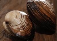 ホッキ貝は 刺身が美味しいですか。 他にどんな料理の仕方がありますか。