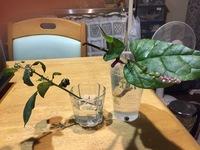 植物の名前 食物?  友人の庭に生えていた、植物ですが,写真の植物のそれぞれの名前と、それらは食物になるのか教えてください?  写真右側は、葉が大きくて柔らかく食べれそうです。 茎は 紫色ですし,薄紫...