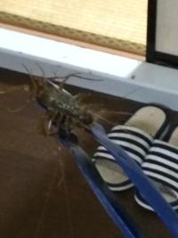 この虫ってなんですか?有害ですか? 浴槽にいました、全長15cm位ありました、大量に足ありました