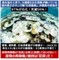 『沖縄サンゴ97%が白化!死滅56%!海水温上昇!石垣、西表島間』 2016/11/10  → 日本近海の海水温の上昇が原因。 ⇒ ならば、 海水温の上昇に直接的に寄与する「原発」は、速やかに廃止すべきでは? ...