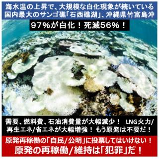 海水温,石西礁湖,白化,西表島,吉田稔,CO2,blue_train22