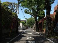この街路樹はなんというものですか?   成城学園前は高級住宅地だそうですね。 街路樹も相応しく立派なものが植えられていますが、根っこが道路を浮き上がらせている様子が見えません。