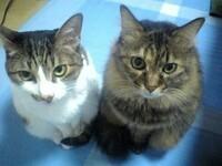 猫好きな人は猫は一匹より二匹飼いたいですか?