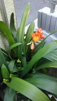 この花は何でしょう 育て方のコツなどありましたら一緒にお願いします