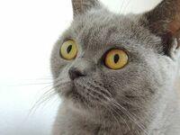 猫ちゃんて普通の人間と 佐伯伽椰子や水沼美々子とかの違い分かるんですかね? やっぱなんかちゃう思てますか?